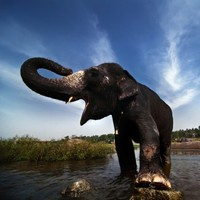 British tourist trampled to death by elephant in India