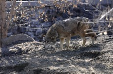 Mystery animal deaths occur at Kiev Zoo