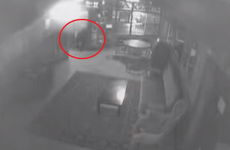 Bear told to get out of Alaskan pub, leaves without incident
