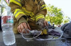 WATCH: Fireman revives kitten using child's oxygen mask