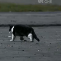Last night's Love/Hate: Dead cats, Nidge's arse, and fizzy orange