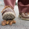 Americans have a higher opinion of toenail fungus and dog poop than of Congress