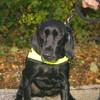 Tobacco-detection dog sniffs out 52,400 illegal cigarettes