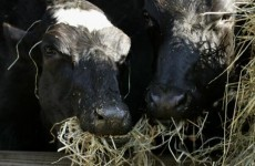 EU talks on banning food from cloned animals collapse