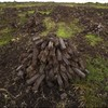 Unauthorised turf cutting declined by 45 per cent so far this year