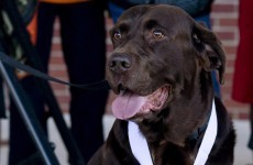 Dog that gatecrashed a half-marathon gets a medal