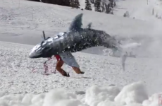 First there was Sharknado... now, there's Sharkalanche