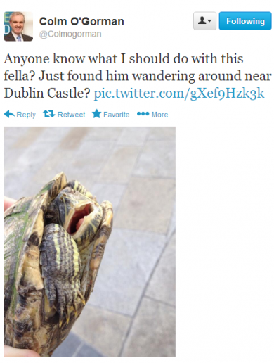 Tortoise found 'wandering around Dublin Castle'