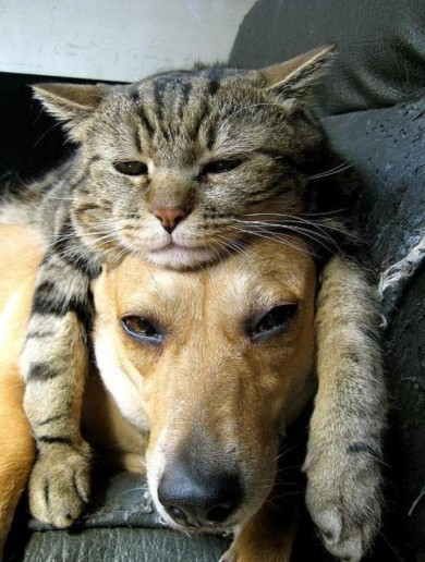 7 dogs who are totally under the cat's thumb