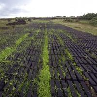 Turf cutters dispute latest Deenihan comments on bogs