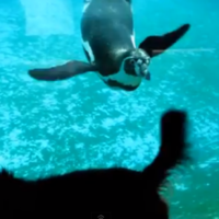 Penguin tries to bite dog's tail through Aquarium glass