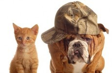 Dog versus cat: Who will take home the title of Best Pet?