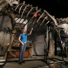 You can now buy a dinosaur for €710,000