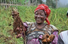 Irish charity tackling African hunger - with potatoes