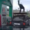 Petrol station attendant breaks out his dance skills on the forecourt