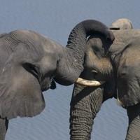 More than 300 elephants deliberately poisoned in Zimbabwe park
