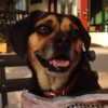WATCH: Dog stars in his own magnificent music video