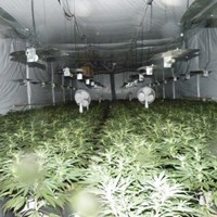 Two charged over €2 million cannabis seizures