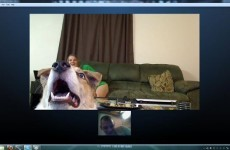 8 pets who know Skype is a great way to spend quality time with someone