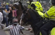 Newcastle fan jailed for a year for punching horse