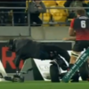 Cameraman pushed off Segway during New Zealand cup final