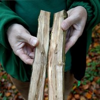 Second outbreak of ash dieback found in hedgerow
