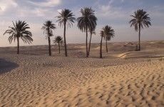 48 children die of thirst in Niger desert