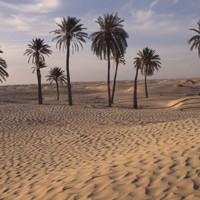 48 children die of thirst in Niger desert