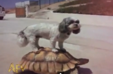 Here are some animals riding other animals
