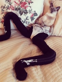 Cats wearing tights are way funnier than dogs wearing tights
