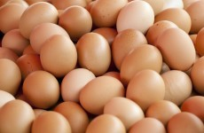 China exchange hatches plan for egg futures
