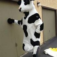 Cow suit thief arrested in Craiglist sting