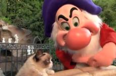 WATCH: Grumpy cat meets grumpy the dwarf