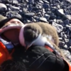 Adorable baby penguin meets human for first time
