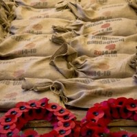 Poll: Should Irish people wear poppies to honour the war dead?