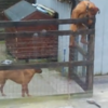 WATCH: Here's how your dogs keep escaping