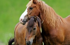 Horse owners 'should get financial help' to tackle unwanted equine problems