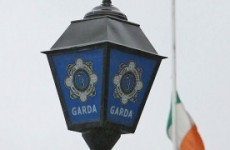 Gardaí seize €400,000 worth of cannabis plants