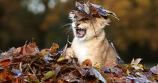 The Week in Photos: Autumnal