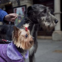 Dublin mayors tell dog-owners: pick up after your pooches