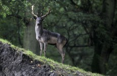 Three men arrested over deer poaching