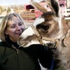 Llama on the run for 6 months given new home