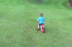 Watch this little boy on a bike crash straight into a tree