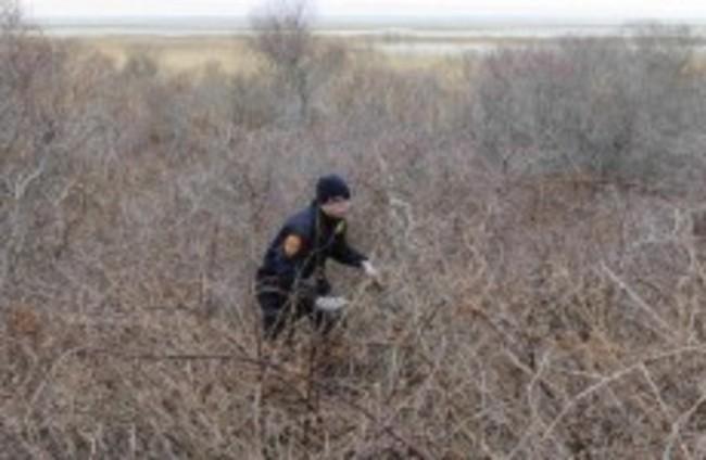 More bones found at New York beach as fears of serial killer grow