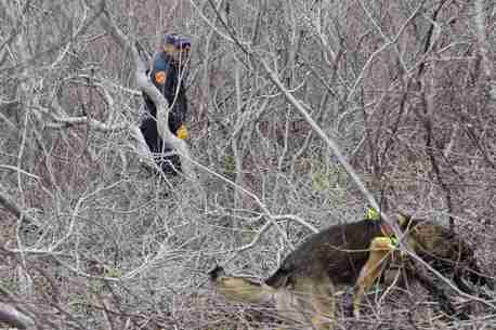 A policeman and a cadaver dog search the thick brush on the side of the road near Oak Beach on Long Island.