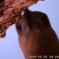 Watch an eagle steal a camera, make its own film