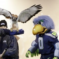 Seahawks fans set new record as the world's loudest crowd