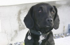 Sniffer dog Holly lands €300,000 drug seizure at Dublin Port