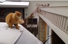 Proof that cats can be just as clumsy as humans