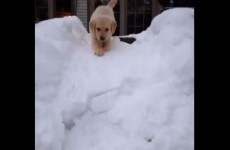 Adorable puppy's first time in the snow